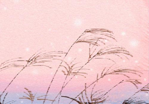 薰衣草花语与浪漫的爱情故事