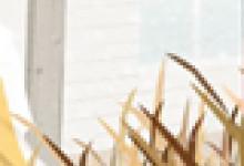 狐尾百合的花语及象征意义