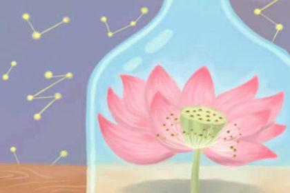 各种花的花语及寓意图片
