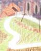 解析植物风水鸢尾花的作用