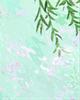 时令美味:清透翠绿的观音豆腐