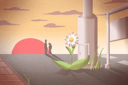 植物花語:紅三葉的花語