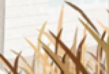 独树一帜的黑龙江饮食文化