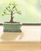 陈益峰:房子的十八种长相