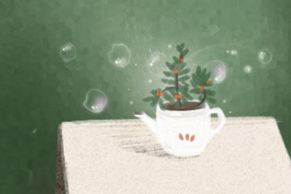 【星座】水养植物风水:适合水养的十大植物