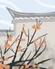 四川省成都市春节习俗有哪些