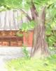 傣族春节,傣族的过年风俗