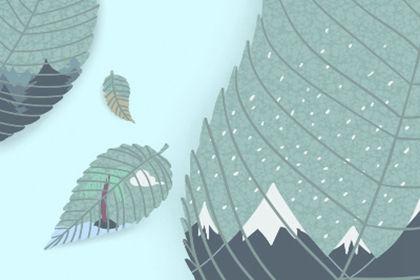 碧螺春和毛尖哪个档次高图片