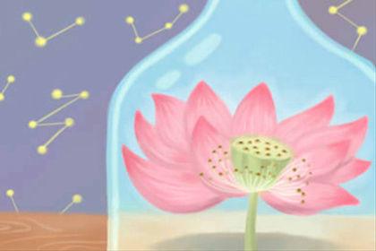 百合花花语