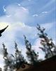 花语科普:宫灯百合花语是什么