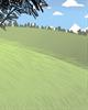 8月24日~9月02日生日树:松树