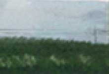 在油菜花盛开的地方,江西婺源什么时候去最好