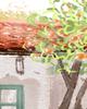 传承弘扬川菜美食文化的成都美食节简介