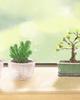 陈益峰:住宅绿化哪些植物符合风水?