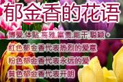 郁金香花语