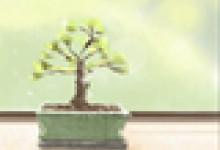 佛塔的作用是什么?纪念佛教圣者