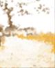 属鸡人2017年本命年爱情运势,桃花朵朵吗