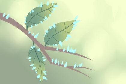 聚财型发财树