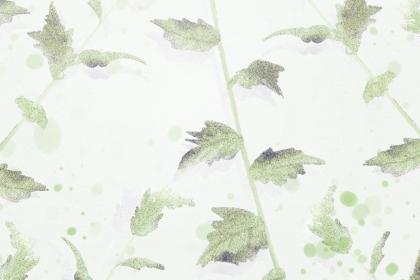 小满补气养阴喝竹荪老鸭汤