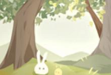 属兔的财运在哪个方向?在西北方?